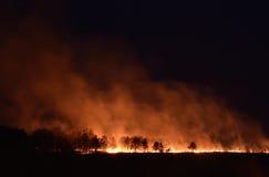 Forest Fire Royaltyfria Foton