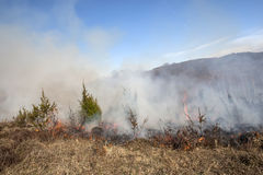Forest Fire images libres de droits