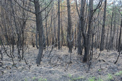 Forest Fire Stock Afbeelding