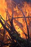 Forest fire. Close-up shot of yellowand red flames royalty free stock image