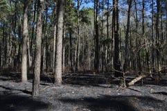 Forest Fire Royaltyfria Bilder