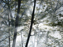 Forest Fire. Sunlight filters through the smoke as it rises among the trees in a forest on fire Royalty Free Stock Photo