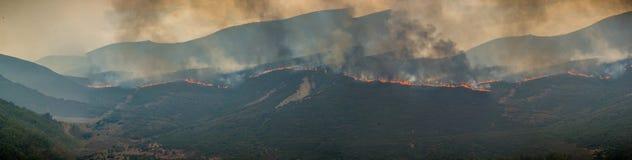 Forest Fire Fotografia de Stock Royalty Free