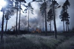 Forest Fire. Coniferous forest on fire stock image