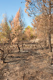 Forest fire aftermath Stock Photos
