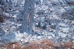 Forest Fire Aftermath imagens de stock