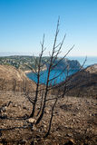 Forest fire aftermath Stock Image