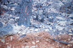 Forest fire aftermath Royalty Free Stock Photography