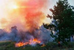 Forest Fire, albero bruciante di incendio violento nel colore rosso ed arancio al tramonto Fotografie Stock