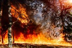 Forest Fire Anslå för att visualisera löpeldar eller ordinerad bränning arkivbilder
