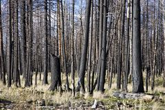 Forest Fire (AO) Stock Image