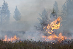Forest fire. Appropriate to visualize wildfires or prescribed burning Royalty Free Stock Photos