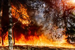Forest fire. Appropriate to visualize wildfires or prescribed burning. stock images
