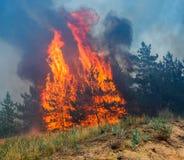 Forest Fire Arbres brûlés après le feu de forêt, pollution et beaucoup de fumée Photo libre de droits