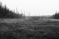After Forest Fire. black and white Stock Image
