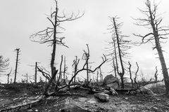 After Forest Fire. black and white Royalty Free Stock Photos