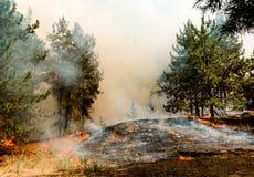 Forest Fire Brända träd efter löpeld, förorening och mycket rök royaltyfri foto