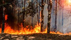 Forest Fire Brända träd efter löpeld, förorening och mycket rök arkivfoton