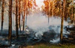 Forest Fire Brända träd efter löpeld, förorening och mycket rök royaltyfria foton