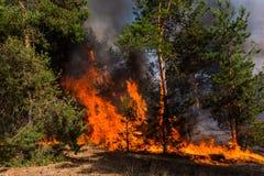 Forest Fire Brända träd efter löpeld, förorening och mycket rök arkivfoto