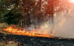 Forest Fire Brända träd efter skogsbränder och massor av rök arkivfoto