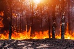 Forest Fire Brända träd efter skogsbränder och massor av rök royaltyfri foto