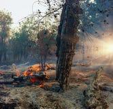 Forest Fire, brennender Baum des verheerenden Feuers in der roten und orange Farbe Stockbild