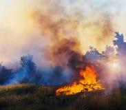 Forest Fire, brennender Baum des verheerenden Feuers in der roten und orange Farbe bei Sonnenuntergang Stockfotografie