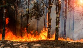 Free Forest Fire. Burned Trees After Wildfire, Pollution And A Lot Of Smoke. Stock Photos - 101197813