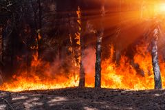 Forest fire. Burned trees after forest fires and lots of smoke royalty free stock photo
