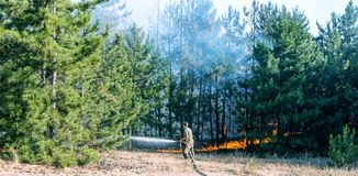 Coniferous forest in fire stock images