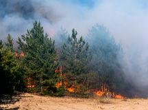 Coniferous forest in fire royalty free stock images