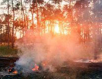 Forest fire. Burned trees after forest fires and lots of smoke. Forest fire. Burned trees after forest fires and lots of smoke Stock Image
