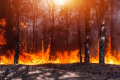 Forest fire. Burned trees after forest fires and lots of smoke. Royalty Free Stock Photo