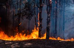 Forest fire. Burned trees after forest fires and lots of smoke stock photo
