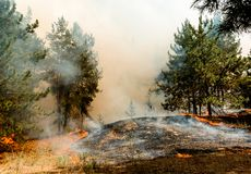 Forest fire. Burned trees after wildfire, pollution and a lot of smoke. royalty free stock photo