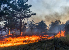 Forest fire. Burned trees after wildfire, pollution and a lot of smoke. stock image