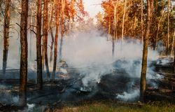 Forest fire. Burned trees after wildfire, pollution and a lot of smoke. royalty free stock photos