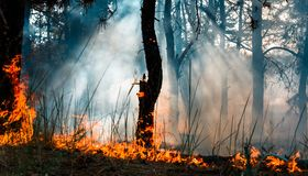 Forest fire. Burned trees after wildfire, pollution and a lot of smoke.  stock photos