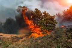 Forest fire. Burned trees after wildfire, pollution and a lot of smoke.  royalty free stock photography