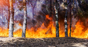Forest Fire Burning stock afbeeldingen