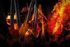 Forest on fire Royalty Free Stock Photo
