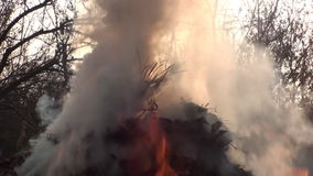 Forest Fire Burning And Smoke stock video