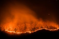 Forest fire burning trees at night royalty free stock photo