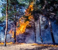 Forest fire burning, Wildfire close up at day tim. royalty free stock photos
