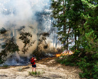Forest fire burning, Wildfire close up at day time. royalty free stock photography