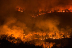 Forest fire burning, Wildfire at night. Stock Photography