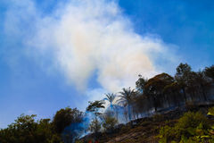Forest fire caused by dry season. Forest fire cause by drought season on a hill side stock image
