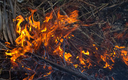 Forest fire close up photo. Burning wood and tree branches. Stock Photo