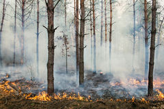 Forest fire and clouds of smoke Stock Photos
